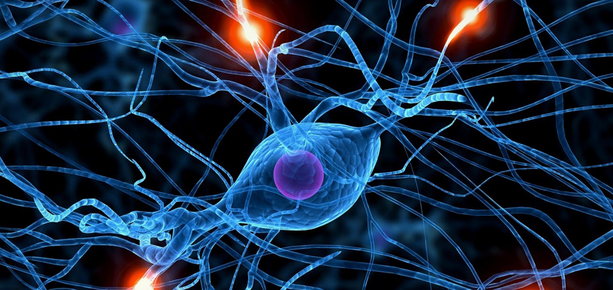 Nerve, Synapse, Axon, Neuron